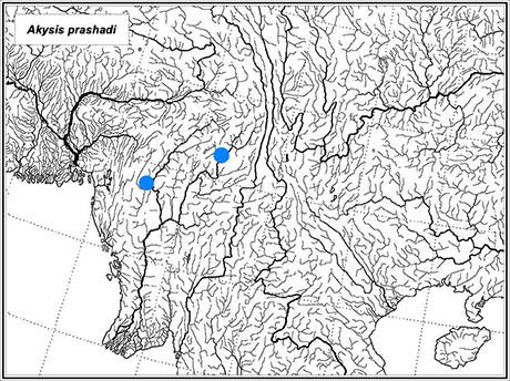 distribution Akysis prashadi