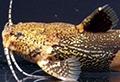 akysis prashadi poisson rare